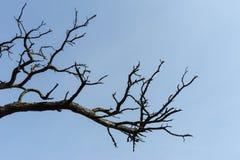 torr tree för filial Royaltyfri Fotografi