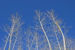 torr tree för filial Arkivfoto