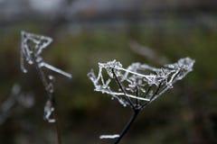 Torr växt för makro i kall skog arkivfoto