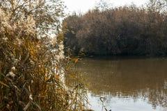 Torr vass på flodbanken fotografering för bildbyråer