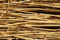 Torr vasstextur Organisk naturtapet av den gula rottingen Royaltyfria Bilder