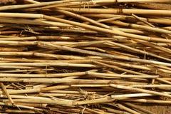 Torr vasstextur Organisk naturtapet av den gula rottingen Royaltyfri Foto