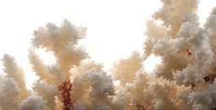 Torr vit korall som isoleras på vit panorama Arkivfoton