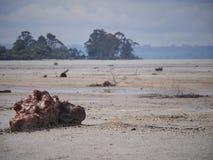 Torr vulkanisk sjö i Rotorua, Nya Zeeland arkivbilder