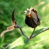 torr weed royaltyfri fotografi