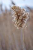 torr weed Royaltyfria Foton