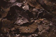 Torra blad p? jordningen royaltyfri fotografi