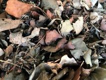 Torra bladdöda lämnar växtjordning royaltyfria foton