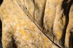 Torra bladdetaljer och mycket hög-res för backgrond Arkivfoto