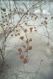 torra blommor Royaltyfria Foton