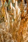 torra blommor Fotografering för Bildbyråer
