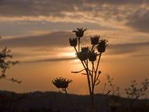 torra blommor Arkivbild