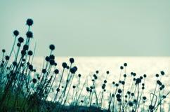 torra blommor Arkivfoto