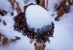 Torra blommor i frostvintern Arkivbild