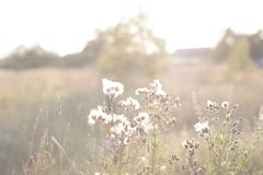 Torra blommor i sommarfältet, naturlig sommarhöstbakgrund royaltyfri bild