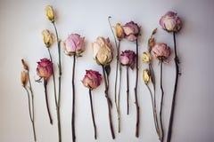 Torra blommor på den vita tabellen Royaltyfri Bild
