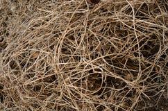 Torra bruna vinrankor textureras jämnt flätade samman på jordningen Royaltyfri Bild
