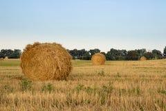 Torra buntar för hö på bygdfält under skördtid Arkivfoton