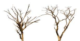Torra döda träd för isolat Arkivbilder