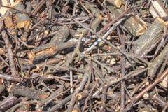 Torra filialer av träd som krossas in i små stycken arkivfoto