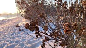Torra filialer i vintertid överallt snow skjuten solnedgångtid för exponering long stock video