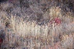 Torra gräs och kala träd i vinterskog Royaltyfri Fotografi