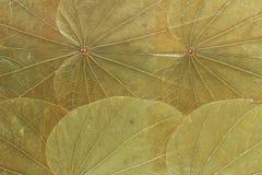 torra gröna leafs royaltyfri bild