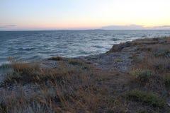 Torra gras på stenar av havskusten arkivfoton
