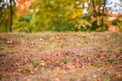 Torra höstsidor i gräset på bakgrunden av oskarpa träd royaltyfria bilder
