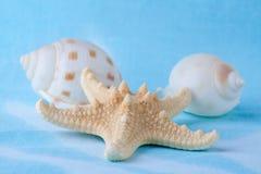 Torra havsskal och sjöstjärna Royaltyfri Foto