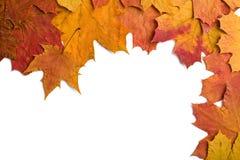 torra isolerade leaves för höst Fotografering för Bildbyråer