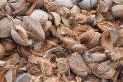 Torra kokosnötskal fotografering för bildbyråer