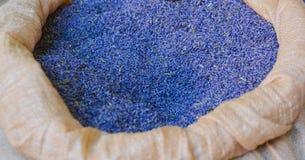 torra lavendelar för bakgrund provence Royaltyfria Bilder