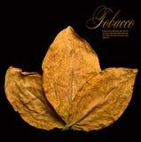 torra leafs royaltyfri fotografi