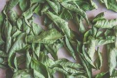 torra leaves för bakgrund Fotografering för Bildbyråer
