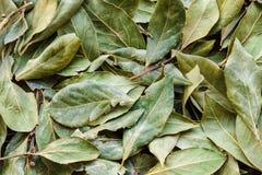 torra leaves för bakgrund Royaltyfria Foton