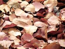 torra leaves för bakgrund Arkivfoton
