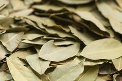 torra leaves för bakgrundsfjärd Arkivbilder