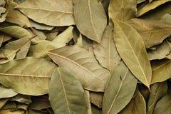 torra leaves för bakgrundsfjärd Arkivbild