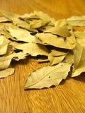 torra leaves för fjärd Royaltyfria Bilder
