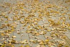 torra leaves för höstbakgrund Fotografering för Bildbyråer