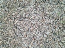torra leaves för höstbakgrund royaltyfria foton