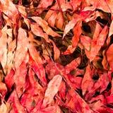 Torra leaves för radda som ligger på jordningen Fotografering för Bildbyråer