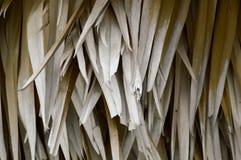 torra leaves gömma i handflatan Royaltyfri Fotografi