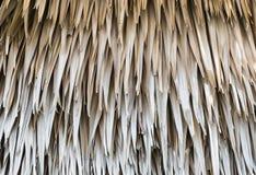 torra leaves gömma i handflatan Arkivfoton