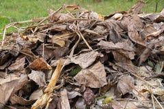 Torra leavs av träd som samlas i jordning arkivfoton