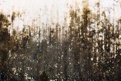 Torra Moss Abstrack Wall Fotografering för Bildbyråer