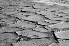 torra mudskal royaltyfria foton