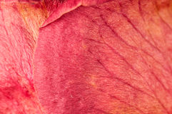 torra petals steg Royaltyfri Bild