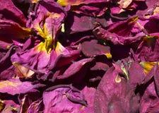 torra petals steg Royaltyfria Bilder